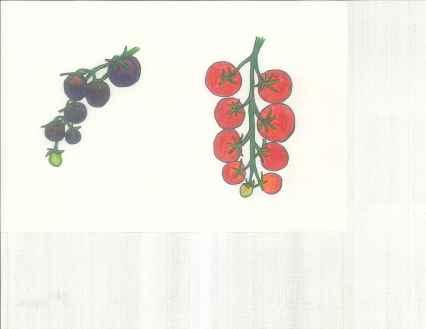 Black Cherry and Tiny Tim