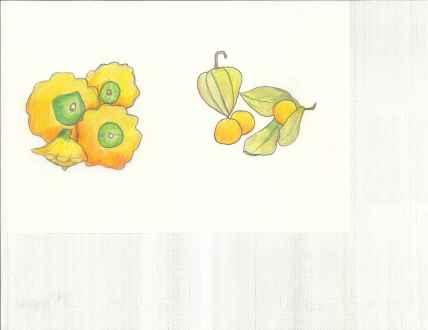 Patty Pan Squash and ground cherries