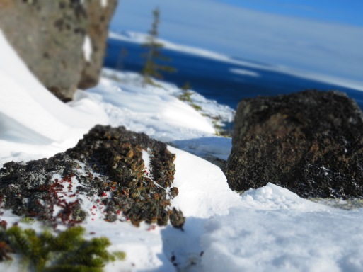 The small, small world of lichen, even in the harshest of places