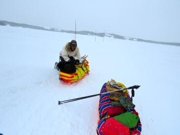 Frank figured out pretty quickly that a nice comfy place to rest was on one of our sleds when we stopped moving. Here he's helping Dave check the map in the middle of the Musquaro River.
