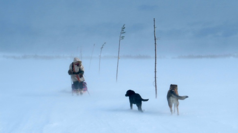 Adrien and the dogs forging their way through 85 km/hour wind gusts across a wide open bay. WIth aggressive side winds our sleds would get blown sideways, sometimes pulling us with them.
